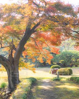 紅葉ある庭園の写真・画像素材[1765783]