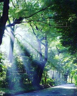木々から差し込む光の筋の写真・画像素材[1765803]