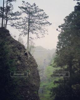 崖っぷちに立つ木の写真・画像素材[1767446]