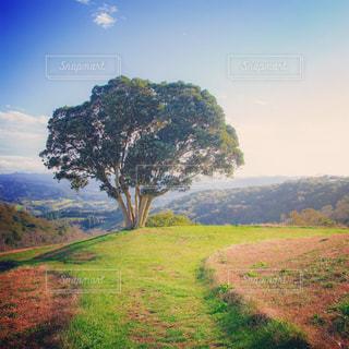 山腹にある一本の木の写真・画像素材[1767449]