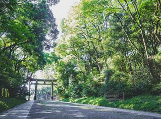 木々の間にある参道の写真・画像素材[1767469]