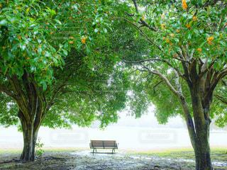 キンモクセイの木の下にあるベンチの写真・画像素材[1767971]