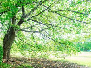 夏を謳歌する樹木の写真・画像素材[1768153]