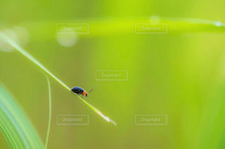 草の上でたそがれる虫の写真・画像素材[1768154]