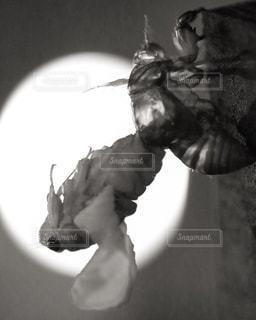 セミの羽化の写真・画像素材[1770886]