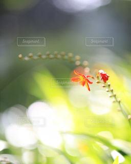 光に浮かぶ花の写真・画像素材[1772091]