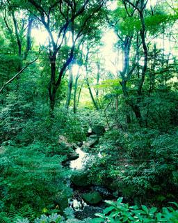 森と湧水の写真・画像素材[1772095]