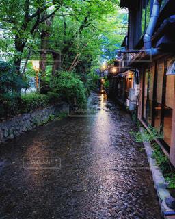 京都 高瀬川のせせらぎの写真・画像素材[1772102]