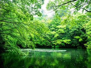 水辺に映り込む緑と木々の写真・画像素材[1775325]