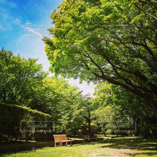 木の下にあるベンチの写真・画像素材[1775368]