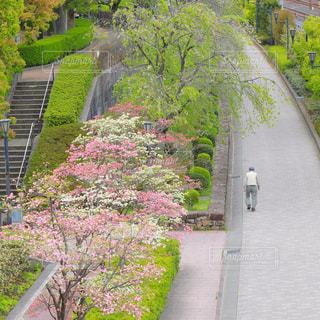 咲き誇る花を見ながら散歩する人の写真・画像素材[1777144]
