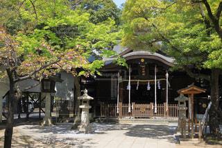 新緑を迎える神社の写真・画像素材[1777146]