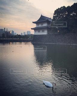 池でお役白鳥の写真・画像素材[1778328]