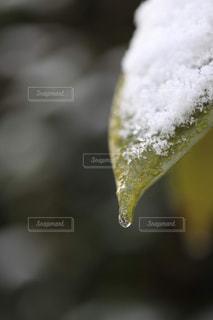 雪水しずくの写真・画像素材[1784185]