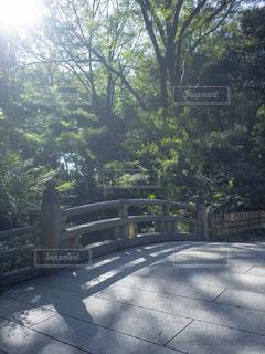 樹木と橋の写真・画像素材[1785157]