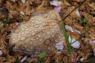 濡れ落ち葉の写真・画像素材[1786948]