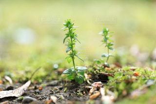 小さな芽の写真・画像素材[1786949]