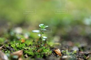 小さな芽の写真・画像素材[1786950]