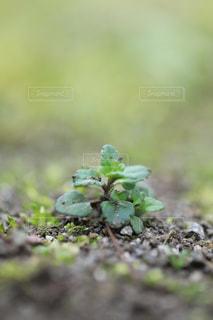 小さな草の写真・画像素材[1787018]