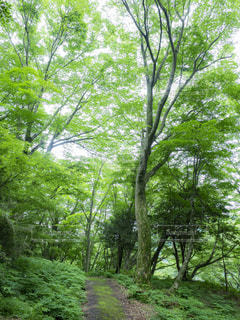 林道の写真・画像素材[1788416]