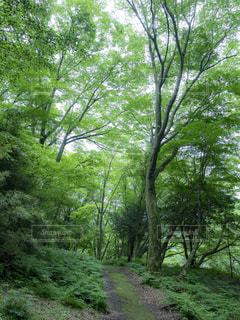林道の写真・画像素材[1788417]
