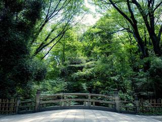 境内の橋の写真・画像素材[1788419]