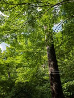 緑に覆われた樹木の写真・画像素材[1789310]