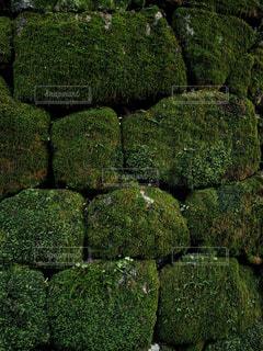 苔に覆われた石段の写真・画像素材[1789312]