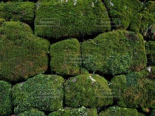 苔に覆われた石段の写真・画像素材[1789315]