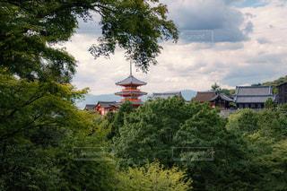 緑に囲まれた五重塔の写真・画像素材[1789316]