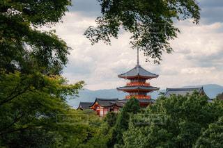緑に囲まれた五重塔の写真・画像素材[1789317]