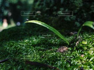 葉と苔の写真・画像素材[1789319]