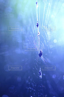 光に照らされたクモの巣の写真・画像素材[1789322]