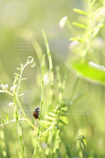 草とテントウムシの写真・画像素材[1790197]
