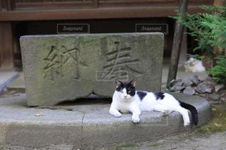 休む猫たちの写真・画像素材[1790739]