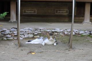 休む猫の写真・画像素材[1790740]