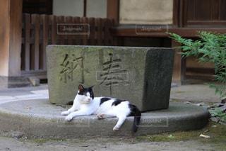 休む猫の写真・画像素材[1790743]