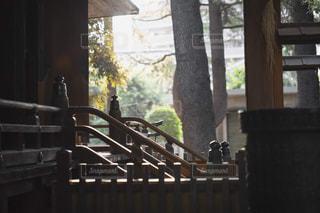 本殿の階段の写真・画像素材[1790744]