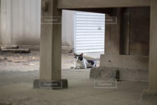 軒下で寝転ぶ猫の写真・画像素材[1793638]