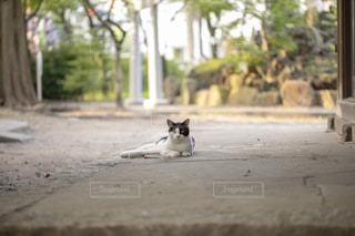 地面に横になっている猫の写真・画像素材[1793639]