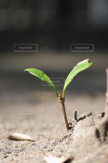 小さな芽の写真・画像素材[1793688]