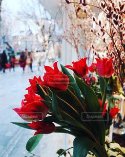 窓際にあるチューリップの花束の写真・画像素材[1793712]