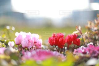 公園に咲く花の写真・画像素材[1793713]