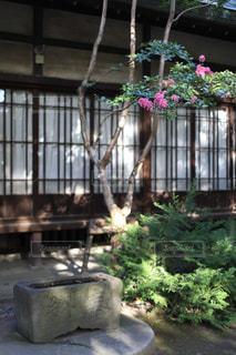 水がめとサルスベリの花の写真・画像素材[1794537]