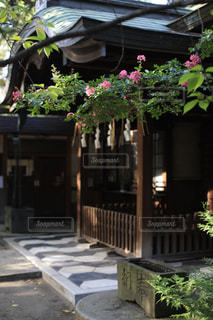 境内に咲くサルスベリの花の写真・画像素材[1794538]