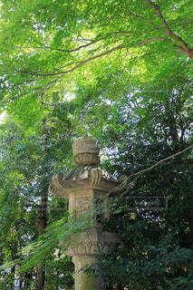 木の下にある石灯籠の写真・画像素材[1794836]
