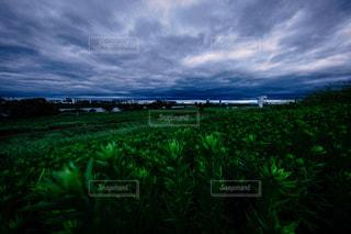 河川敷の草むらと雲の写真・画像素材[1794839]