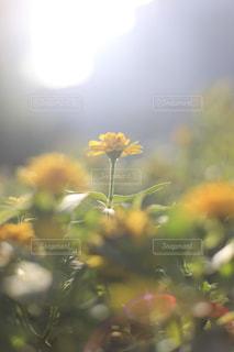 天に向かう花の写真・画像素材[1794843]
