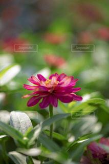 近くの花のアップの写真・画像素材[1796587]
