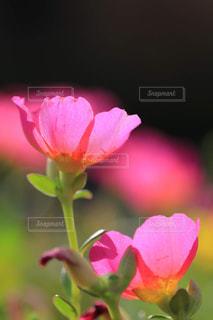近くの花のアップの写真・画像素材[1796589]